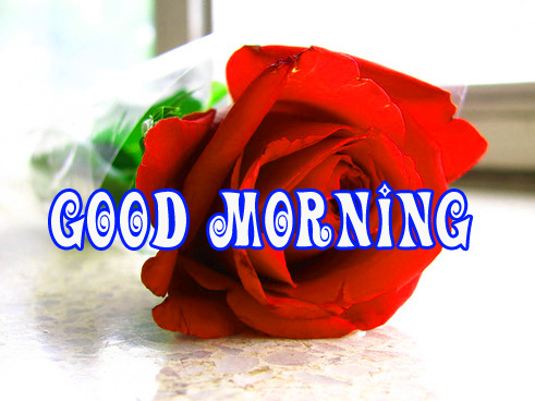 Good morning red rose images Photo Pictures for Whatsapp