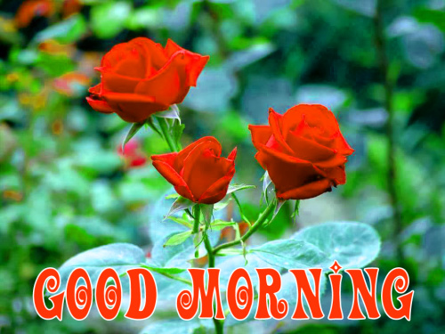 special Wonderful good morning images Photo Download