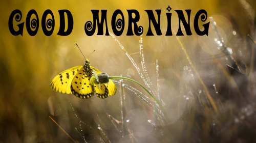 special Wonderful good morning images Pics Wallpaper Download