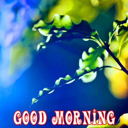 Wonderful Good Morning Images Wallpaper Pics for Whatsapp