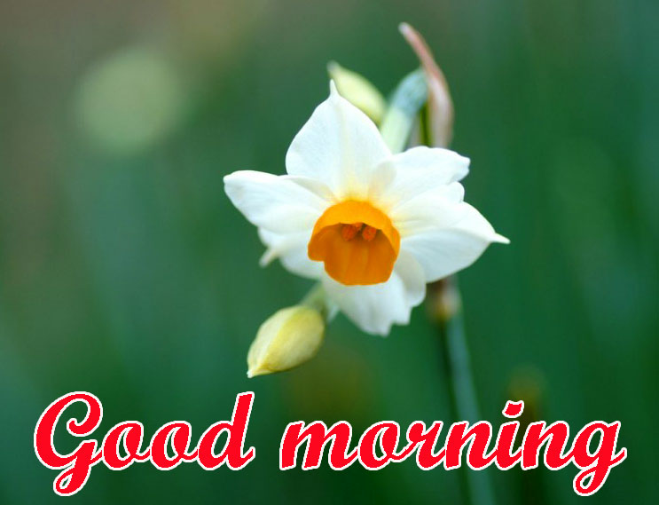 BEAUTIFUL 3D GOOD MORNING IMAGES PHOTO PICS WITH FLOWER