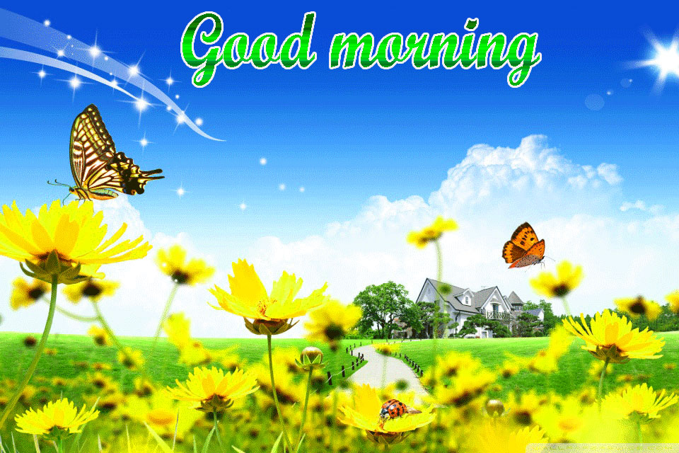BEAUTIFUL 3D GOOD MORNING IMAGES WALLPAPER PHOTO PICS DOWNLOAD