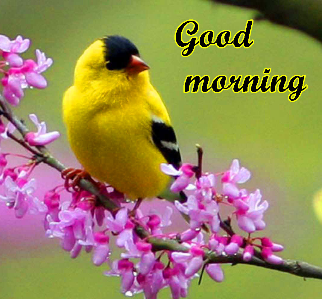 BEAUTIFUL 3D GOOD MORNING IMAGES WALLPAPER PICS FREE DOWNLOAD