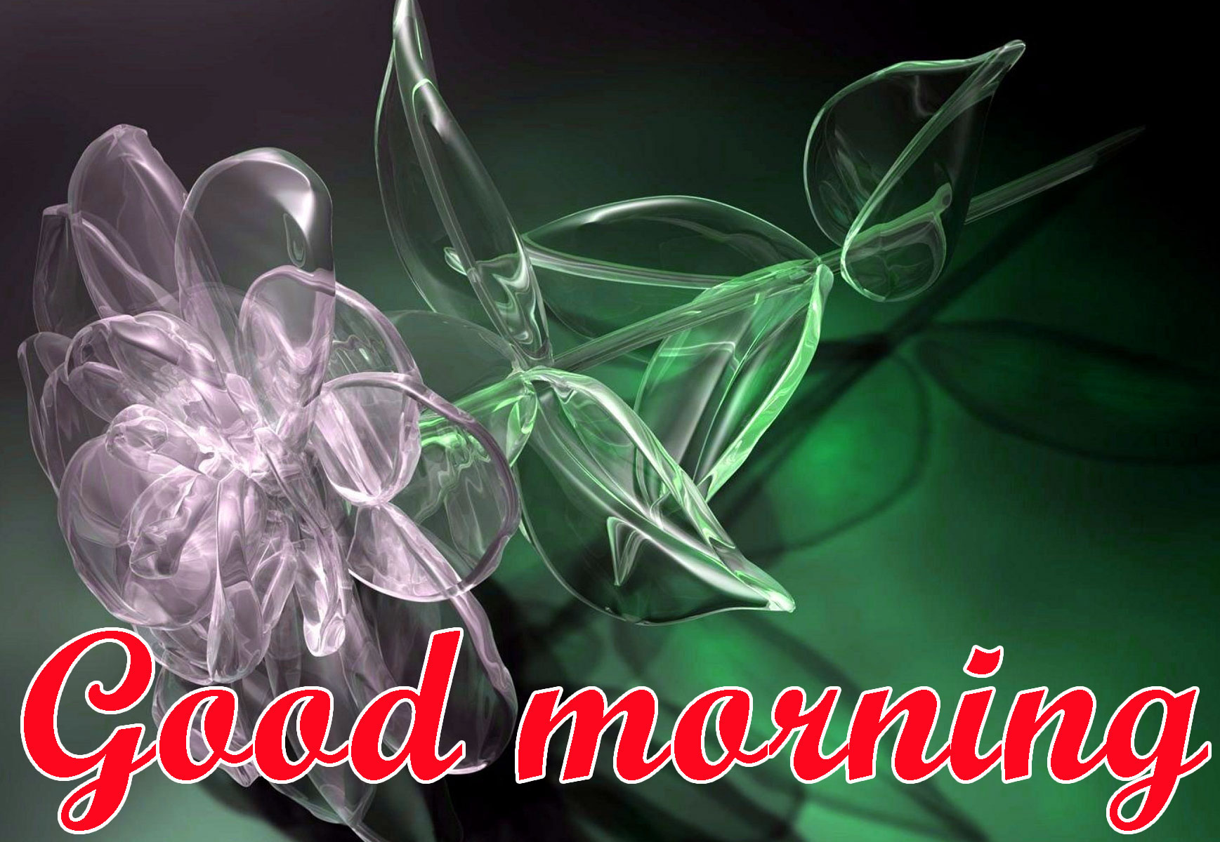 BEAUTIFUL 3D GOOD MORNING IMAGES PHOTO PICS FREE HD