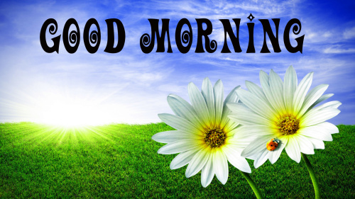 Good Morning Best Beautiful Wallpaper Images Pics Download Beautiful Good Morning Images (3)