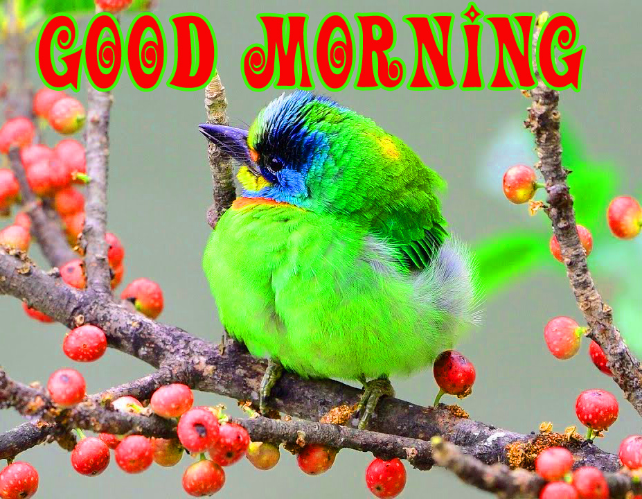 Good Morning Best Beautiful Pics Pictures Download