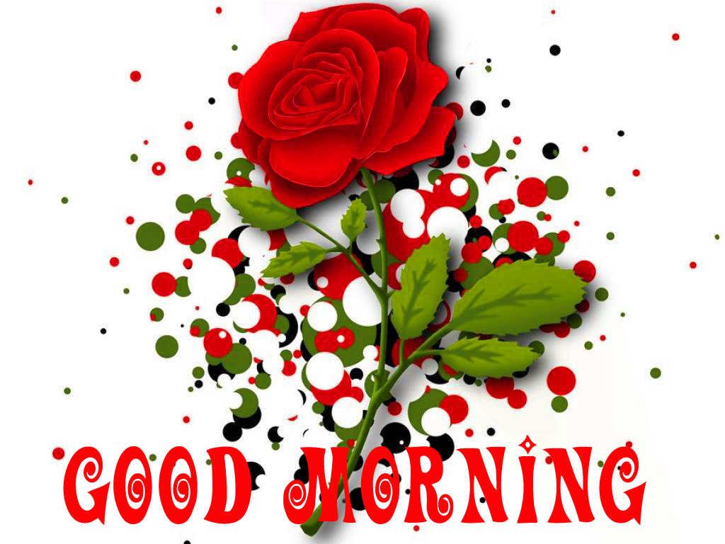 Good Morning Images Pics Wallpaper Pictures With Red Rose