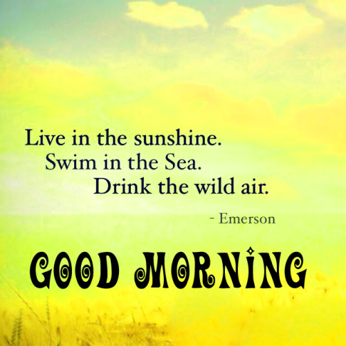 Good Morning My Sunshine Quotes Images Wallpaper Photo Pics