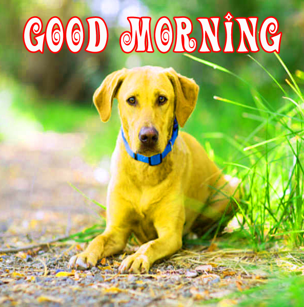Good morning wishes for puppy lover Images Photo Download