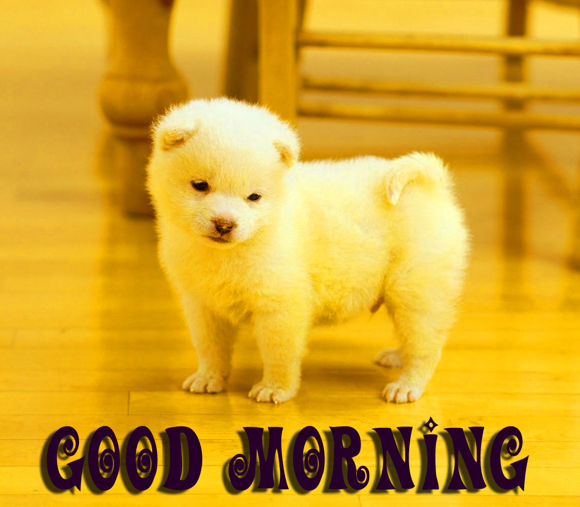 Good morning wishes for puppy lover Images Wallpaper Pics Download