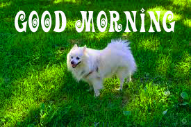 Good morning wishes for puppy lover Images Photo Pics for Whatsapp