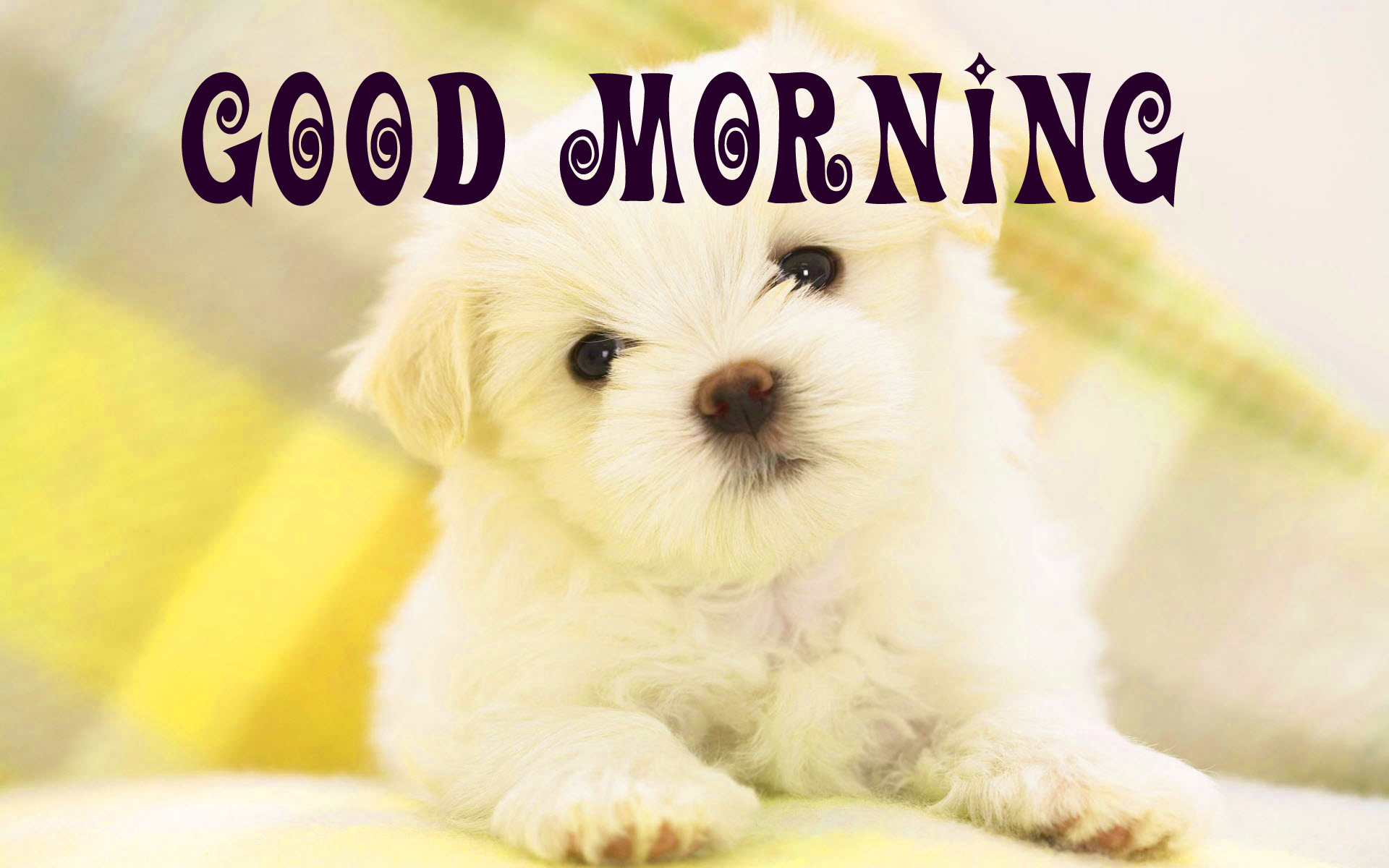 Good morning wishes for puppy lover Images Pic Photo Download