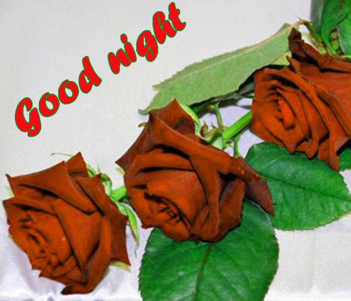 RED ROSE GOOD NIGHT IMAGES PHOTO PICS DOWNLOAD