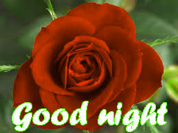 RED ROSE GOOD NIGHT IMAGES WALLPAPER PICTUTE FREE DOWNLOAD