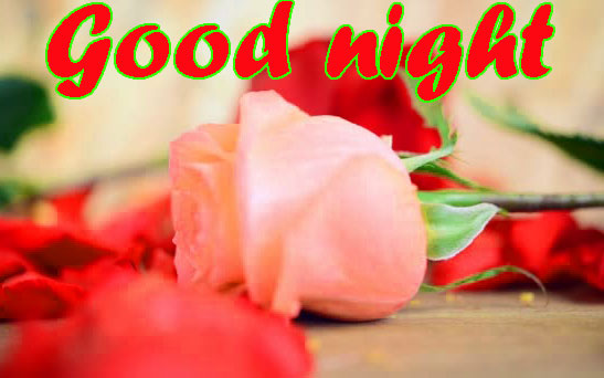 RED ROSE GOOD NIGHT IMAGES WALLPAPER PICS FREE