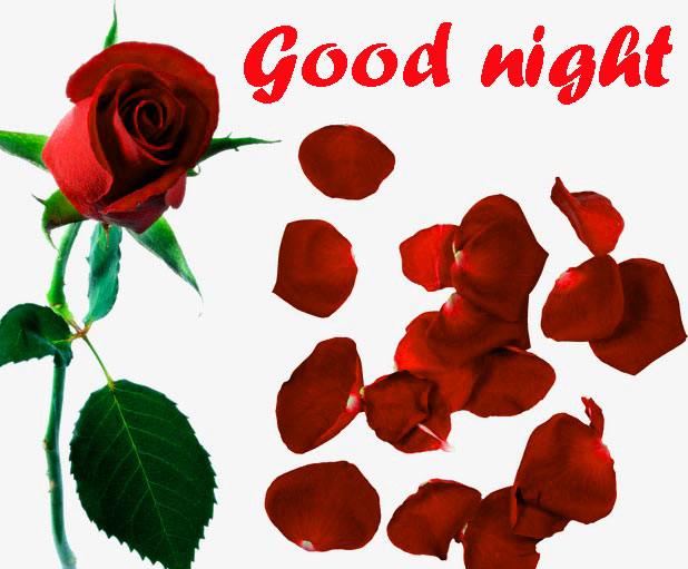 RED ROSE GOOD NIGHT IMAGES WALLPAPER PICS FREE DOWNLOAD