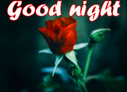 RED ROSE GOOD NIGHT IMAGES PHOTO PICS FREE DOWNLOAD