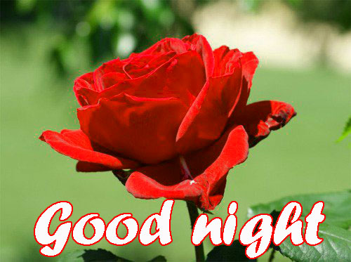 RED ROSE GOOD NIGHT WISHES IMAGES WALLPAPER PICTURES FOR GIRLFRIEND