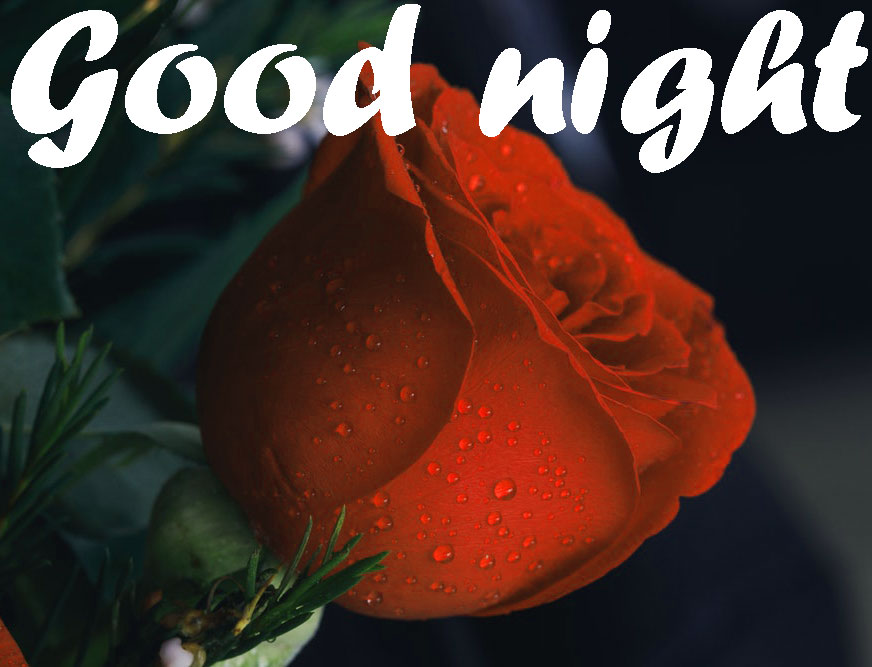 RED ROSE GOOD NIGHT WISHES IMAGES WALLPAPER PHOTO PICS HD
