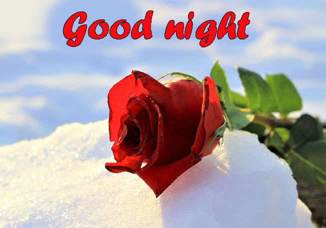 RED ROSE GOOD NIGHT WISHES IMAGES PHOTO PIC FOR WHATSAPP