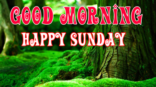 SUNDAY GOOD MORNING IMAGES  PICS WALLPAPER FOR FACEBOOK