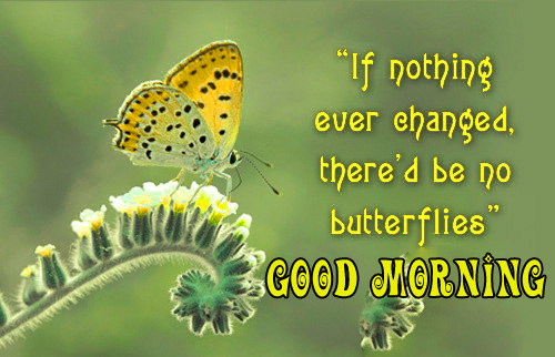 good morning quotes with butterfly Pictures Wallpaper Download
