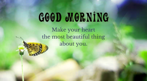 good morning quotes with butterfly Pics Pictures Wallpaper