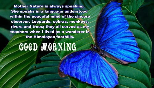 good morning quotes with butterfly Pics Download