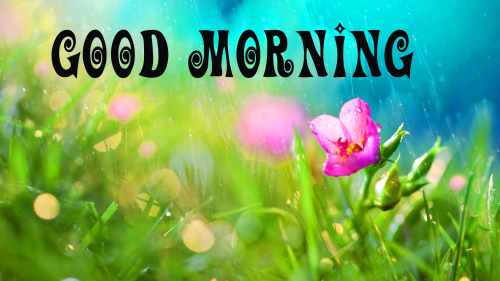 good morning wishes for a rainy day Images Pics Download