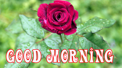 Good Morning Wishes Images Pics Wallpaper for Whatsapp