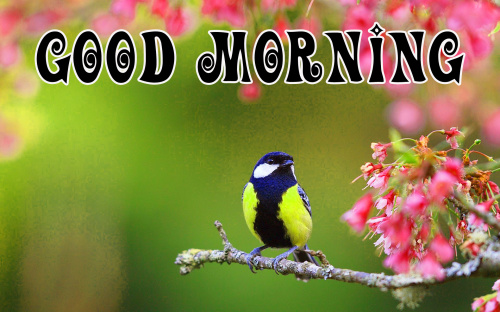 spring Good morning wishes Images Photo Download