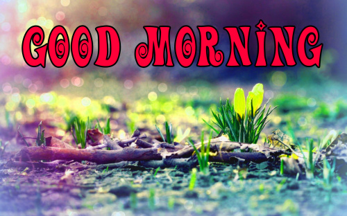 spring Good morning wishes Images Wallpaper Pics Free Download
