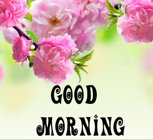 spring Good morning wishes Images Photo Wallpaper