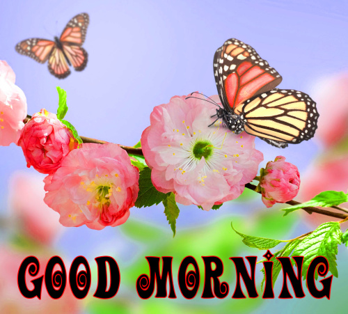 spring Good morning wishes Images Pics Pictures Download