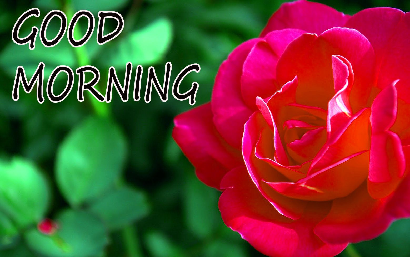 GOOD MORNING IMAGE WITH BEAUTIFUL FLOWERS NATURE WALLPAPER DOWNLOAD