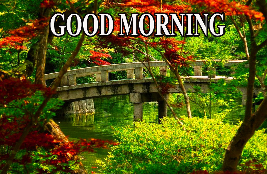 BEAUTIFUL LATEST AMAZING ALL GOOD MORNING IMAGES WALLPAPER PICS HD FREE FOR FACEBOOK