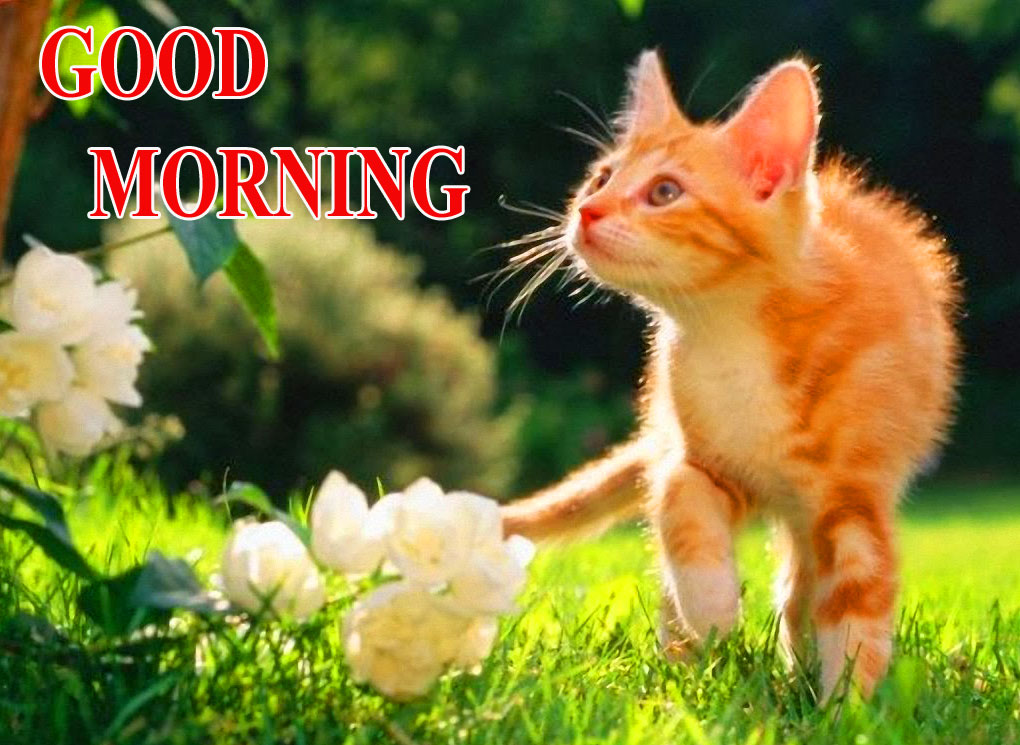 BEAUTIFUL LATEST AMAZING ALL GOOD MORNING IMAGES WALLPAPER PICS DOWNLOAD