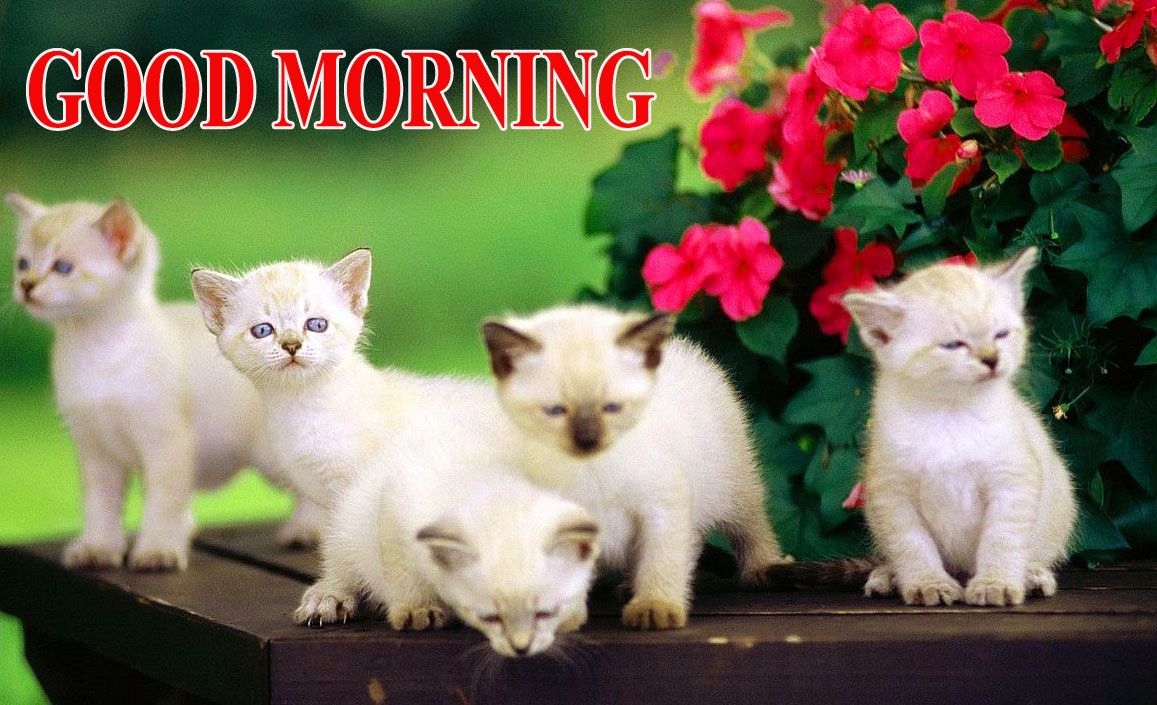 BEAUTIFUL LATEST AMAZING ALL GOOD MORNING IMAGES WALLPAPER PICS FOR GIRLFRIEND