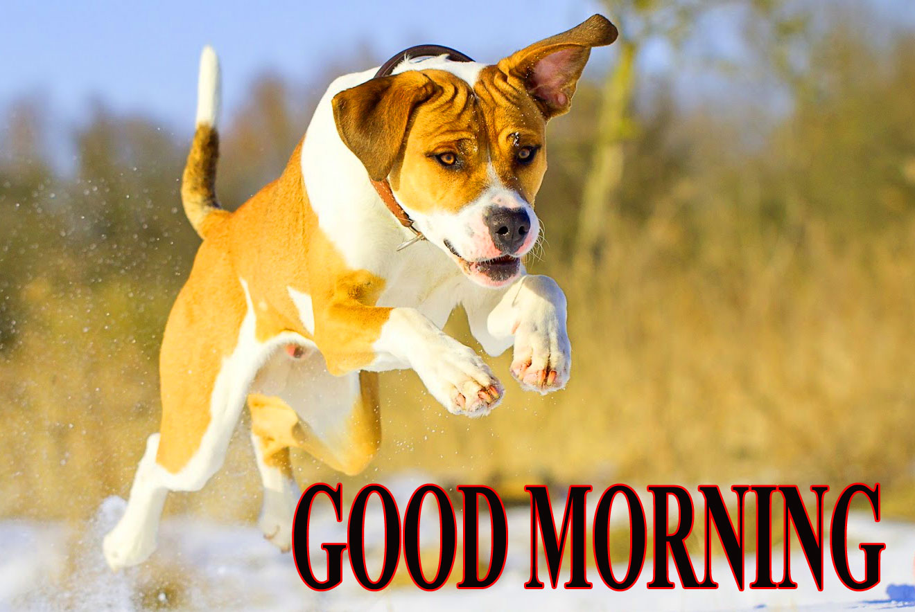 BEAUTIFUL LATEST AMAZING ALL GOOD MORNING IMAGES WALLPAPER PICS FREE DOWNLOAD