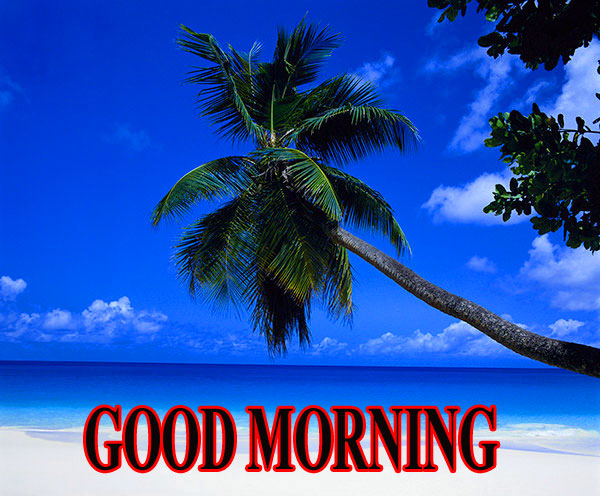 BEAUTIFUL LATEST AMAZING ALL GOOD MORNING WISHES IMAGES WALLPAPER PICTURES HD DOWNLOAD