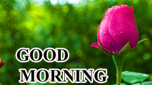 BEAUTIFUL LATEST AMAZING ALL GOOD MORNING WISHES IMAGES WALLPAPER WITH RED ROSE