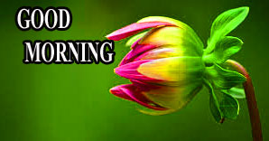 BEAUTIFUL LATEST AMAZING ALL GOOD MORNING WISHES IMAGES WALLPAPER PICS DOWNLOAD