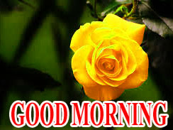 BEAUTIFUL LATEST AMAZING ALL GOOD MORNING WISHES IMAGES WALLPAPER PICTURES