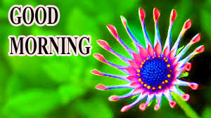 BEAUTIFUL LATEST AMAZING ALL GOOD MORNING WISHES IMAGES WALLPAPER FOR WHATSAPP