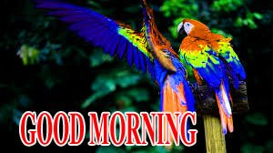 BEAUTIFUL LATEST AMAZING ALL GOOD MORNING WISHES IMAGES WALLPAPER PICS FOR WHATSAPP