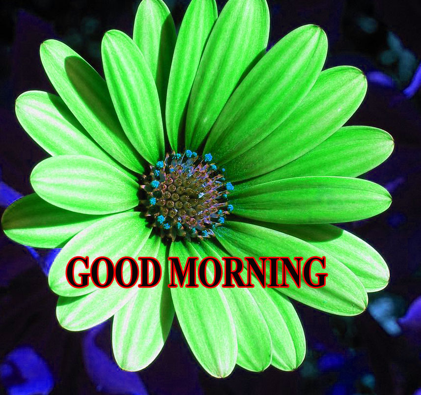 BEAUTIFUL LATEST AMAZING ALL GOOD MORNING IMAGES WALLPAPER PICTURES FOR WHATSAPP