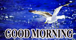 BEAUTIFUL LATEST AMAZING ALL GOOD MORNING WISHES IMAGES WALLPAPER FOR FACEBOOK