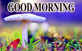 BEAUTIFUL LATEST AMAZING ALL GOOD MORNING WISHES IMAGES PICS FREE DOWNLOAD