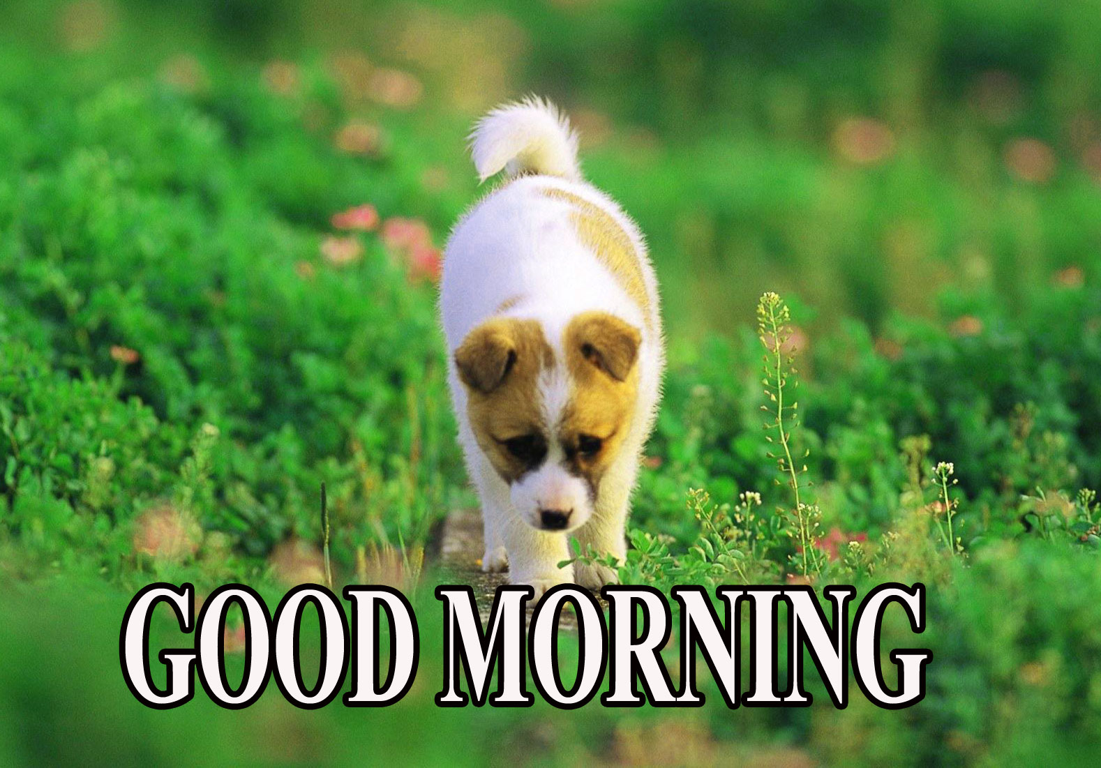 BEAUTIFUL LATEST AMAZING ALL GOOD MORNING WISHES IMAGES PHOTO PICTURES FREE DOWNLOAD