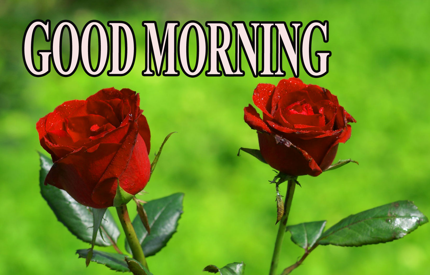 BEAUTIFUL LATEST AMAZING ALL GOOD MORNING WISHES IMAGES WALLPAPER HD DOWNLOAD